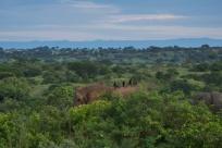 """Éléphants / Elephants (premiers animaux rencontrés durant la """"game drive"""")"""