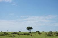 Paysage de savane