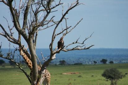 Juste un oiseau sur une branche. Y a rien d'autre de caché en arrière de l'arbre.